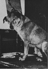 In Pavlov S Experiments With Dogs The Tone Was The