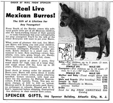 Live Burros From Spencer Gifts